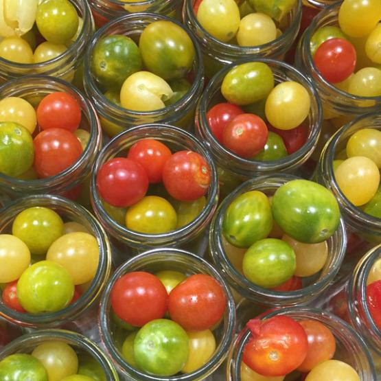 petites-tomates-anciennes-bio